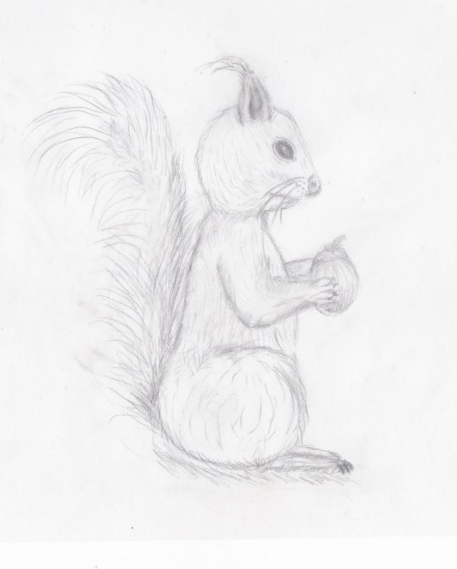 sittende ekorn