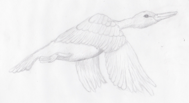 flygende fugl