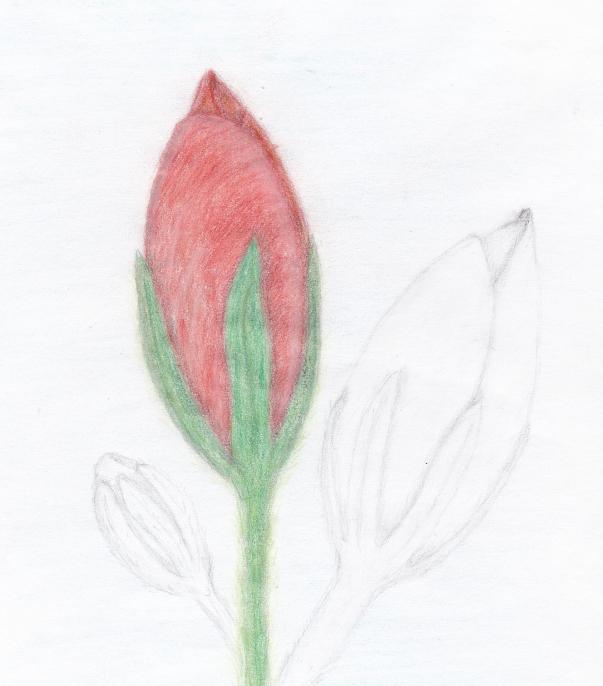 Twigmania roser